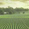 champs vue de haut